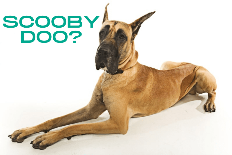 What Kind of Dog is Scooby Doo